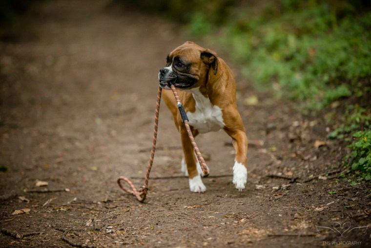 dog_photographer_Derbyshire-36