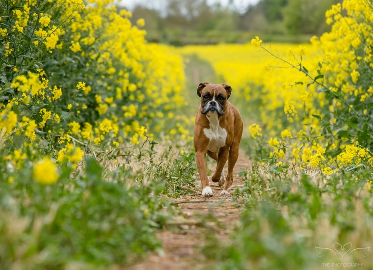 dog_photographer_Derbyshire-45
