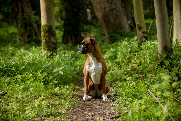 dog_photographer_Derbyshire-6
