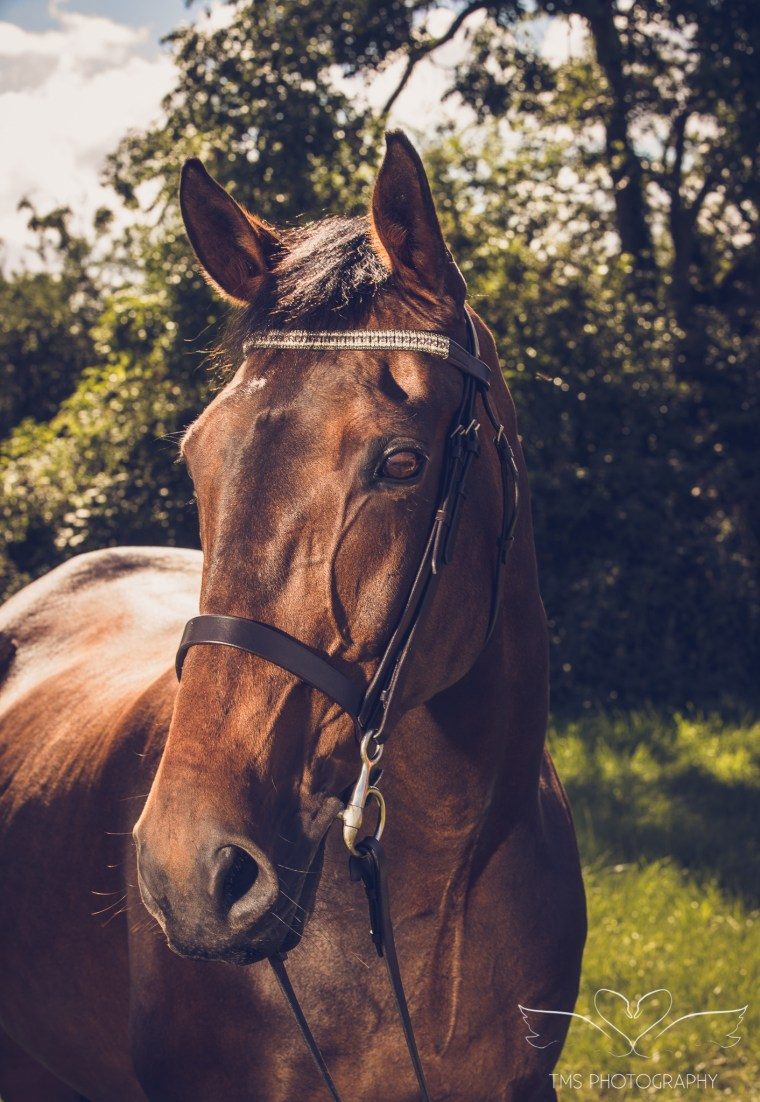 equine_photographer_Derbyshire-57