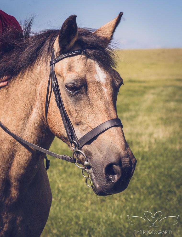 equine_photographer_Derbyshire-70