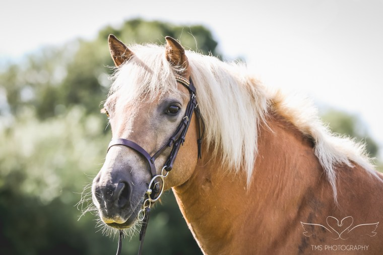 equine_photographer_derbyshire-15