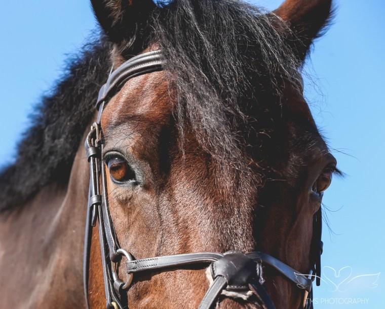 equine_photographer_derbyshire-66