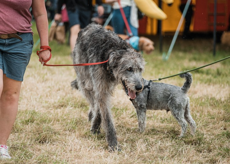 Dog-Fest-Bristol-2019 (112 of 130)