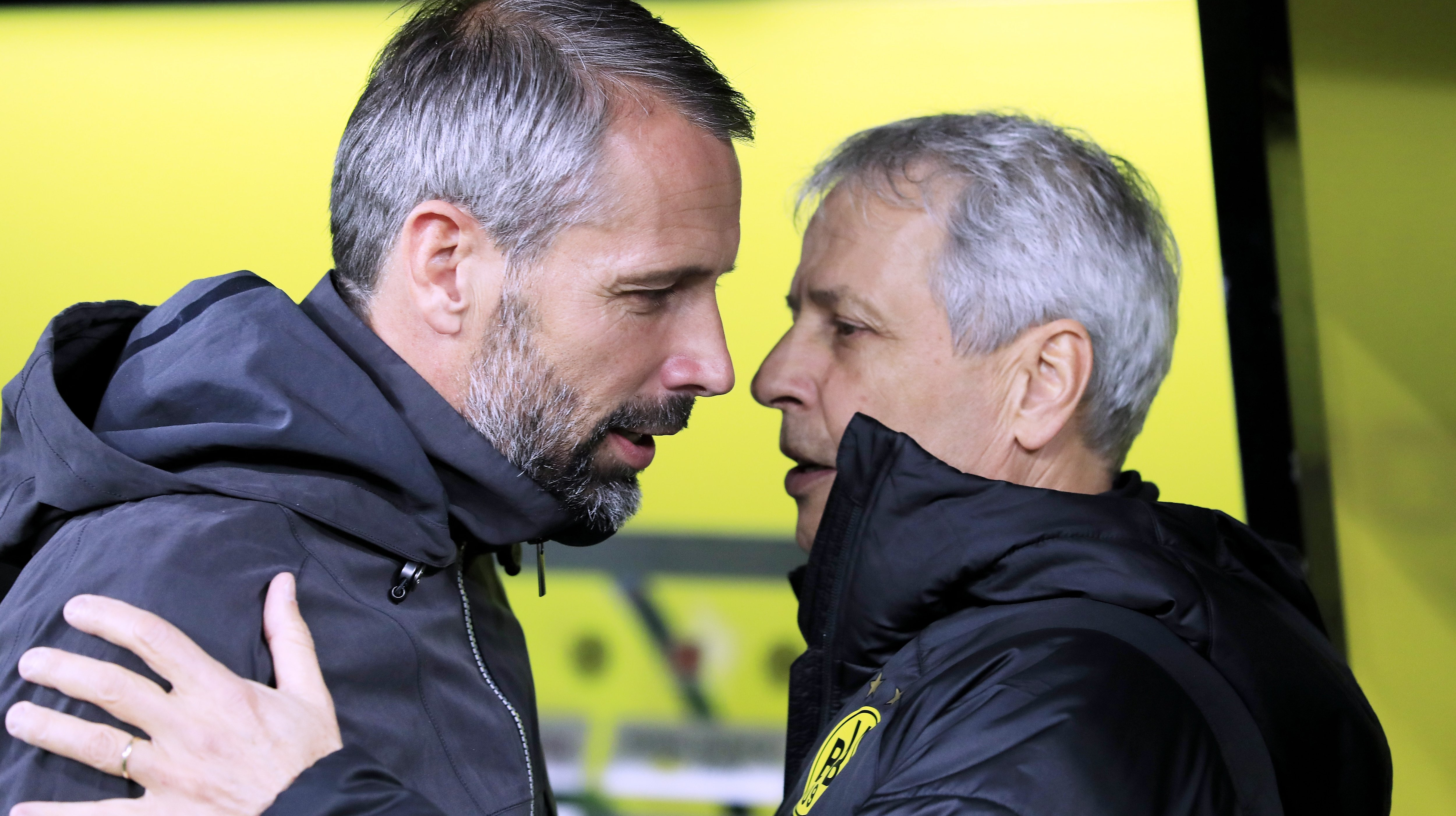 bvb will trainer rose