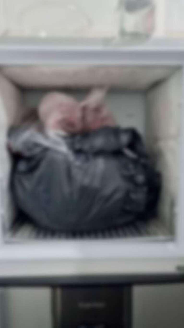 El asesino escondió los restos de la víctima en un freezer. (Foto: Policía Bonaerense).
