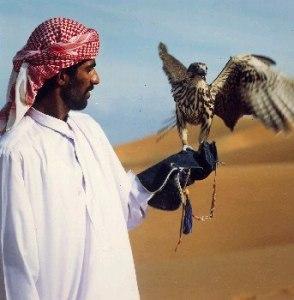 arabian-falconry