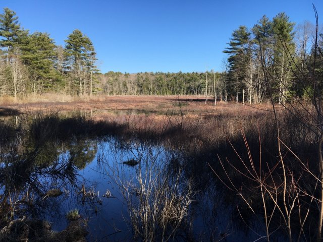 A march in Maine. There is pool of water in the foreground reflecting a deep blue sky.