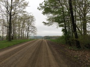 A gravel road going past a clump of tress on both side.