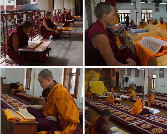 Saga Dawa Tibetan Buddhist nuns reading Kangyur 2020