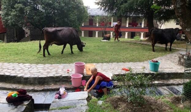 cow fence, Dolma Ling Nunnery, Tibetan Buddhist nunnery