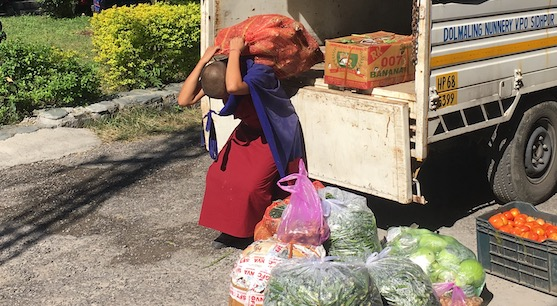 unloading vegetable Dolma Ling Nunnery 2017, covid-19 situation