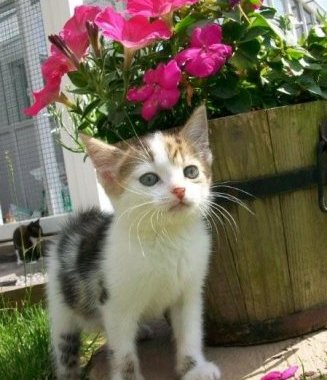 SNIP Rescue Kitten
