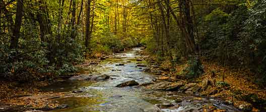 Gatlinburg In The Fall Wallpaper Roan Mountain State Park Tennessee State Parks
