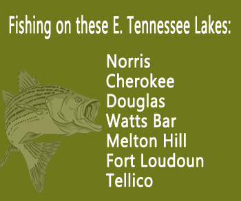 Fishing Lake Trips - Tennessee Lakes Cherokee and Norris