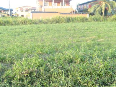 land for sale in gopaul lands