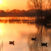 Tennessee wetlands at sunset