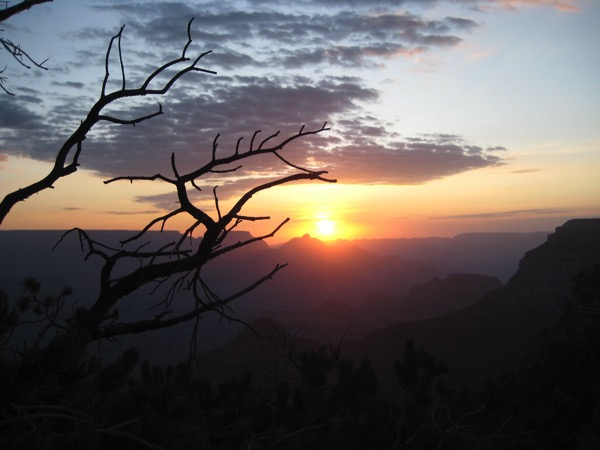 Branch silhouette grand canyon sunrise horizon