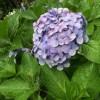 紫陽花を見るついでに食い倒れてきた鎌倉日帰り旅行