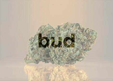 Buy real weed online 1 1 Toastedexotics