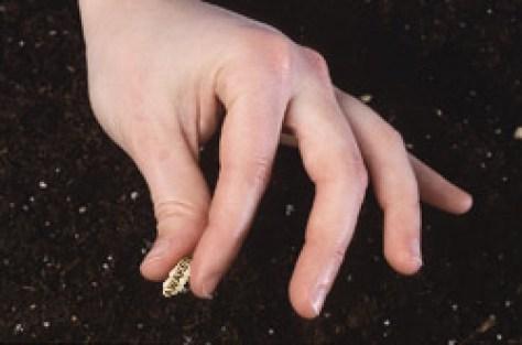 Awaken seed