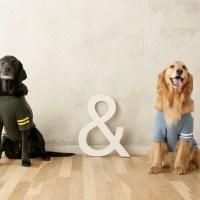 大型犬とフォトセッションinらかんスタジオ