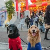 大型犬と横浜中華街〜翠鳳本店