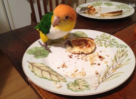 My parrot, Colette, enjoying my homemade pancakes!