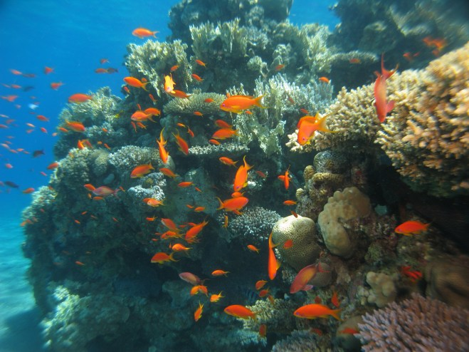 Numerous coral and fish