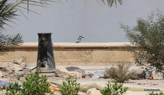Saddam's Palaces Shatt al-Arab River