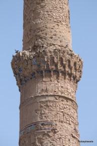 Gawharshad Musalla Complex