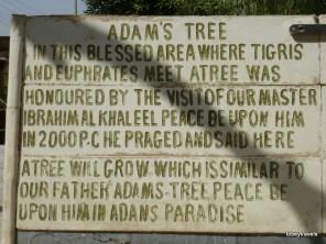 Qurnah, Adam's Tree