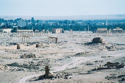 Palmyra almyra