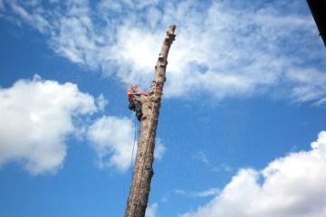Corso di abbattimento controllato in treeclimbing