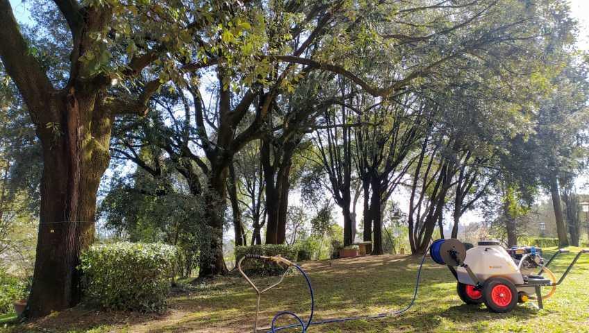 trattamento alle radici degli alberi a Firenze