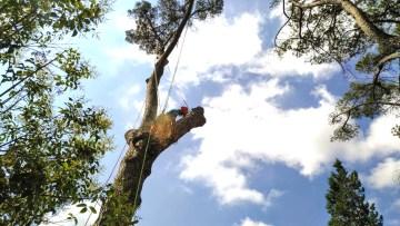 Preventivo abbattimento alberi