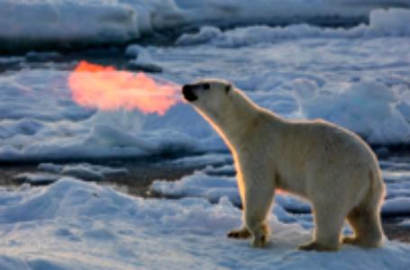 fire breathing bear