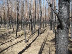Spalony las