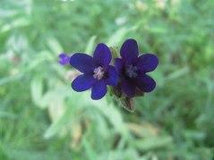 meadow13