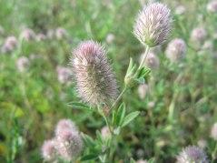 meadow20