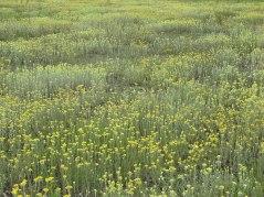 meadow21