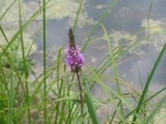 meadow24
