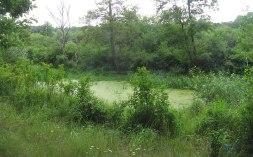 meadow32