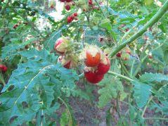 ogrod_botaniczny_lublin17