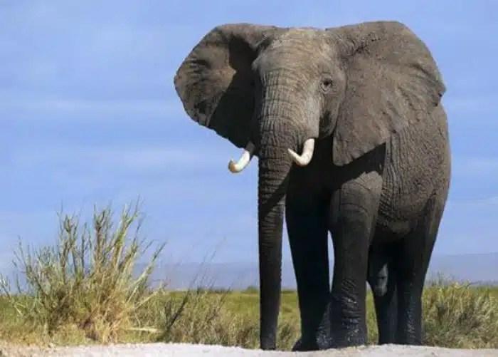 change management, elephant, Toby Elwin, plan, irrational
