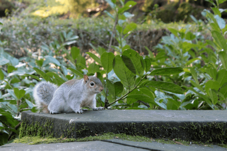 Squirrel again