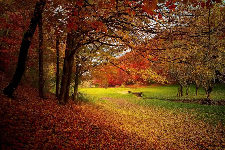 Trees and autumn leaves