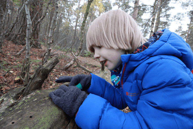 Toby looking at woodpecker holes in a fallen tree