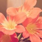 Flores de primavera…