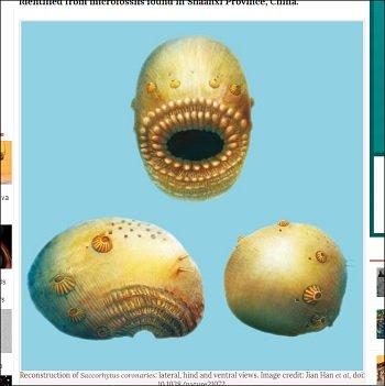 """人類の祖先は""""口がアナル""""の激グロモンスターだった! 5億4千萬年前の化石で判明(最新研究) - TOCANA"""